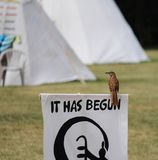 Brown Thrasher bird on protest sign. Bird perched sign protest statement nature look sitting firstnations protest signage royalty free stock images