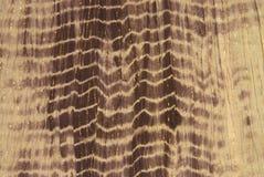 Brown tiefärg Royaltyfria Foton