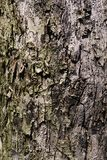 Brown tileable texture of the old tree. Seamless tree bark background stock images