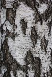 Brown tileable texture of the old tree. Seamless tree bark background royalty free stock photography