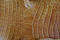 Brown tinted crocodile skin. Purposely blurred Royalty Free Stock Photo