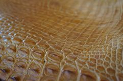 Brown tinted crocodile skin. Purposely blurred Royalty Free Stock Images