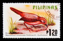 Brown Tit-babbler Macronus striaticeps, Fauna - Birds serie, circa 1979. MOSCOW, RUSSIA - SEPTEMBER 3, 2017: A stamp printed in Philippines shows Brown Tit Royalty Free Stock Photo