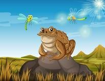 Brown toad sitting on rock. Illustration vector illustration