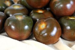 Brown tomatoes Royalty Free Stock Photos