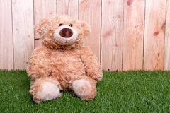 Brown toy bear on green grass Stock Photos
