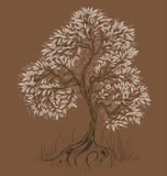Brown tree Royalty Free Stock Image
