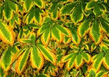 Brown, Tree, Autumn, Nature Stock Image