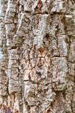 brown tree bark Stock Photo