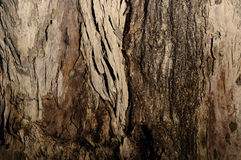 Brown Tree Bark royalty free stock image