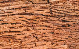 The structure of the brown thick bark of a tree royalty free stock photo