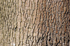 Brown tree bark texture in landscape orientation Royalty Free Stock Photography