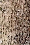 Brown tree bark texture in portrait orientation Royalty Free Stock Photos