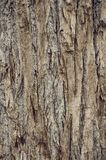 Brown tree bark Royalty Free Stock Photo
