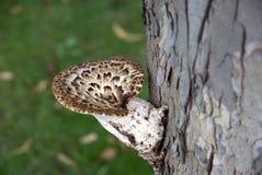 Brown tree fungus Stock Image