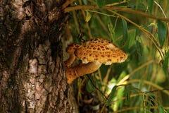 Brown tree fungus Royalty Free Stock Photos