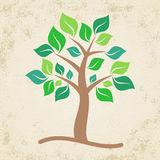 Brown tree Stock Images