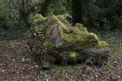 Brown Tree Log Filled With Moss on Withered Leaf Field Royalty Free Stock Images