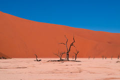 Brown Tree With No Leaf on Dessert Under Blue Sky Stock Photography