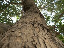 Brown Tree Trunk Royalty Free Stock Photos