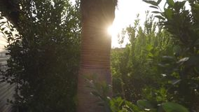 Brown tree trunk between green leaves in sunlight. Sunset or dawn in eastern country. Beautiful Turkish nature. Brown tree trunk between green leaves in stock video