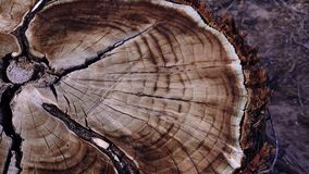 Brown Tree Trunk Slice, New Mexico. USA stock video