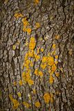 Brown tree trunk texture background Royalty Free Stock Photo