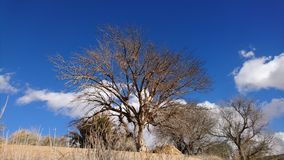 Brown Tree Under Blue Sky Royalty Free Stock Photography
