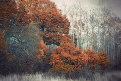Brown trees in autumn landscape Stock Photography