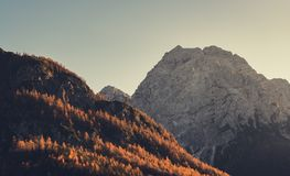 Brown Trees Near Rocky Mountain Under Clear Sky Royalty Free Stock Photography