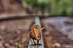 Brown triceratops dinosaur chodzący na torach szynowych daleko od obrazy royalty free