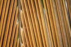 Brown trocknete Kokosnuss Palmblatthintergrund Lizenzfreies Stockfoto