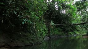 Brown tropical forest stream or river with lush green vegetation and a fallen tree. Brown tropical forest stream or river with lush green vegetation stock video