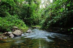 Brown tropical forest stream or river with lush green vegetation royalty free stock photography