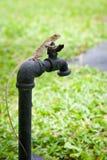 Brown tropical lizard Stock Photos