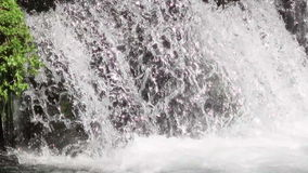 Brown Trout Jumping waterfall stock footage