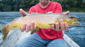 Brown trout on the river. Man in boat royalty free stock images
