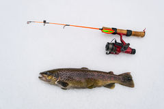 Brown trout - winter fishing trophy Royalty Free Stock Photo