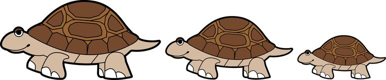 Brown Turtle Parade Royalty Free Stock Images