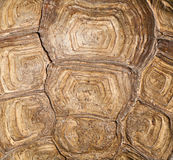 Brown turtle shell background. Background from turtle shell macro royalty free stock photos