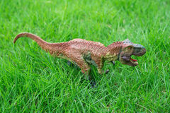 Brown tyrannosaurus toy. Stands on grass Royalty Free Stock Image
