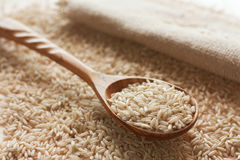 Brown uncut rice Royalty Free Stock Photos