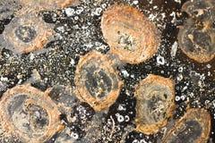 Brown und beige Ellipsen auf einem schwarzen Hintergrund Stockbilder