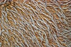 Brown und weiße Pelzbeschaffenheitsnahaufnahme Lizenzfreies Stockfoto