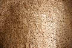 Brown undulating. Leather for background usage Stock Images