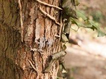 Brown Up i Złota Drzewna barkentyna Zamknięci z liśćmi Hangin i gałązkami obrazy stock