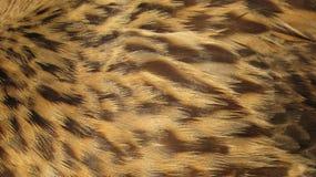 Brown versieht Hintergrund mit Federn Stockfotos