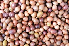 Brown and violet olive background Royalty Free Stock Photo