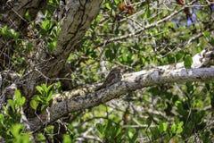 Brown-Vogel im Baum Lizenzfreies Stockfoto