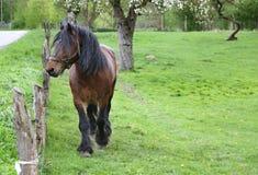 Brown władzy koń na klauzurze przy łąkowym paśnikiem, stoi ogrodzeniem zdjęcia royalty free